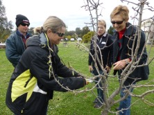 attendees-get-pruning-grenfell