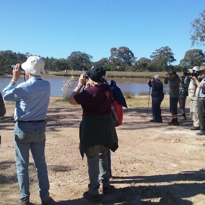 Birding NSW will be conducting their Autumn survey around Grenfell on 20-21 March_Photo Mikla Lewis